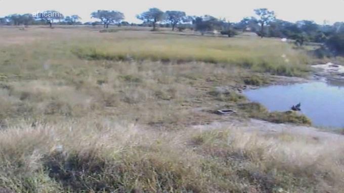 Nkorho Pan, парк Крюгера. Мапуталенд (Южная Африка)