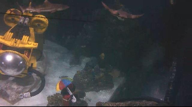 аквариум с акулами. Карлсбад, Нью-Мексико (США)