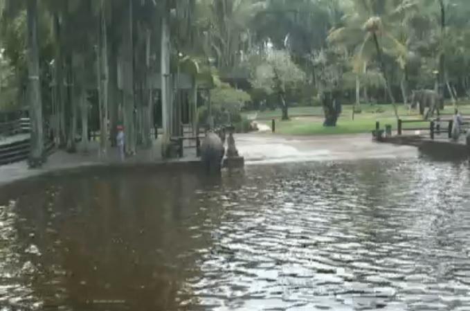 купальня слонов. Бали (Индонезия)