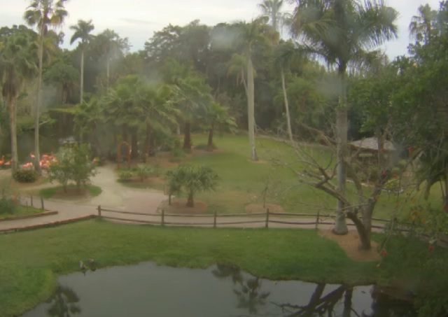фламинго, сад джунглей. Сарасота, Флорида (США)