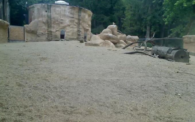 зоопарк. Любляна (Словения)