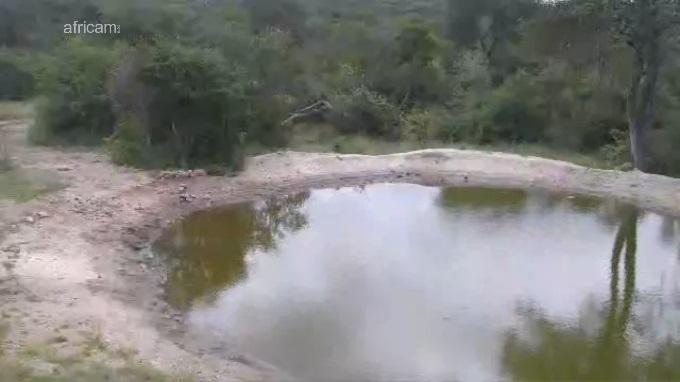Naledi, парк Крюгера. Мапуталенд (ЮАР)