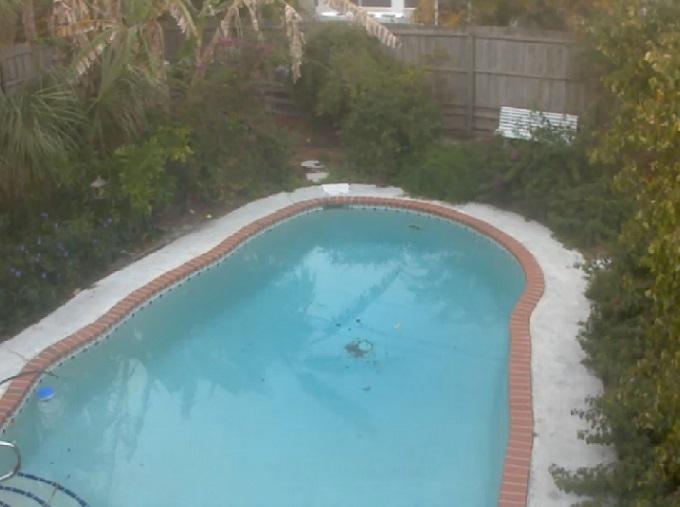 собачий бассейн. Сарасота, Флорида (США)
