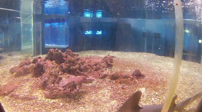 Рифовые акулы. Лоо, Сочи