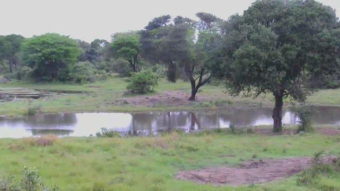 Tembe, национальный парк Крюгера, слоны. Мапуталенд (Южная Африка)